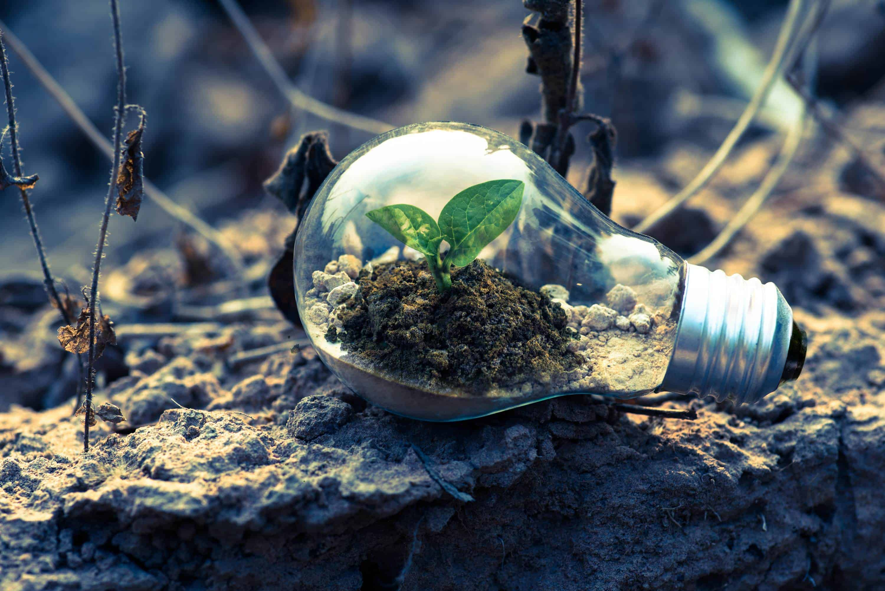 Image of growth - plant in a lightbulb